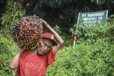 Indonesia resmi ajukan gugatan terhadap Uni Eropa ke WTO terkait sawit