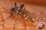 WHO sebut Jumlah kematian akibat malaria melebihi COVID-19 di Afrika