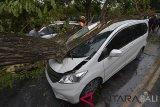 Petugas BPBD menangani pohon tumbang yang menimpa mobil di Denpasar, Bali, Kamis (24/1/2019). Hujan deras disertai angin kencang yang masih melanda Bali menyebabkan pohon perindang terus bertumbangan di berbagai tempat dan menimpa sejumlah kendaraan serta bangunan. ANTARA FOTO/Nyoman Hendra Wibowo/nym.Petugas BPBD menangani pohon tumbang yang menimpa mobil di Denpasar, Bali, Kamis (24/1/2019). Hujan deras disertai angin kencang yang masih melanda Bali menyebabkan pohon perindang terus bertumbangan di berbagai tempat dan menimpa sejumlah kendaraan serta bangunan. ANTARA FOTO/Nyoman Hendra Wibowo/nym.
