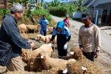 Pengamat: Promosikan kerajinan wol domba Batur