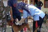 Pemkab Agam turunkan 40 petugas cegah penularan rabies