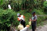 Petani melakukan perawatan tanaman buah naga secara organik di Jambe Wangi, Sempu, Banyuwangi, Jawa Timur, Rabu (23/1/2019). Inovasi penggunaan bahan organik sebagai perawatan tanaman buah naga tersebut, selain dapat menghemat biaya daripada menggunakan bahan kimia juga dapat meningkatkan harga jual, karena lebih tahan lama dan baik untuk kesehatan. Antara Jatim/Budi Candra Setya/ZK