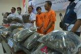 Petugas Badan Narkotika Nasional Provinsi (BNNP) memperlihatkan barang bukti ganja kering hasil penangkapan dua tersangka KR (ketiga kanan) dan MH (kedua kanan) dalam konferensi pers di Denpasar, Bali, Rabu (9/1/2019). BNNP Bali menyita 25Kg ganja kering dalam lima paket kiriman dari Sumatera Utara melalui jasa kargo dan menangkap kedua tersangka sebagai pemilik barang tersebut. ANTARA FOTO/Nyoman Budhiana.