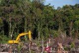 PT Adei Plantation di Bengkalis terindikasi lakukan perambahan hutan
