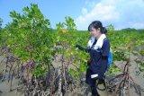 Perwakilan Organization for Industry Spiritual Culture and Advancement (OISCA) Internasional Anna Karodi memantau pertumbuhan pohon mangrove di Desa Lembung, Pamekasan, Jawa Timur, Kamis (7/2/2019). OISCA secara rutin sejak tahun 2010  lalu melakukan pemantauan terhadap  pohon mangrove di daerah itu. Antara Jatim/Saiful Bahri/ZK.