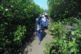 Perwakilan Organization for Industry Spiritual Culture and Advancement (OISCA) Internasional Ada Nakagaki (kiri) didampingi anggota komunitas 'Sabuk Hijau' Endang Tri Wahyurini (kedua kiri) memantau pertumbuhan pohon mangrove di Desa Lembung, Pamekasan, Jawa Timur, Kamis (7/2/2019). OISCA secara rutin sejak tahun 2010 lalu melakukan monitoring terhadap pohon mangrove di daerah itu. Antara Jatim/Saiful Bahri/ZK.