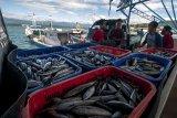 Pemkab Bantul bantu nelayan Palu dan Donggala