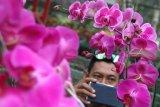 Pemerintah pacu pengembangan sentra tanaman hias di Tawangmangu