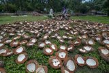 Petani kelapa harap Pemprov Sulteng stabilkan kembali harga kopra
