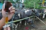 Pemilik sapi di Boyolali peroleh pemeriksaan gratis