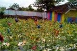 Pengunjung sedang menikmati suasana ditengah tanaman bunga matahari di objek wisata 'Taman Bunga Matahari' di Kampung Rawa Keladi, RT 002 RW 02, Desa Sukamurni, Kecamatan Sukakarya, Kabupaten Bekasi, Jawa Barat. (Megapolitan.antaranews.com/Foto: Pradita Kurniawan Syah).