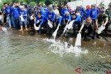 Kawasan tambak kakap putih pertama di Indonesia diluncurkan
