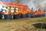 Polresta Yogyakarta musnahkan 1.083 batang tanaman ganja (VIDEO)