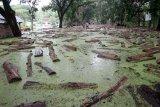 Ratusan balok kayu jati berserakan mengambang di jalanan  di Tempat Penimbunan Kayu Jati (TPK) Bojonegoro, Jawa Timur, terendam air banjir, Rabu (6/3). Namun pihak Kesatuan Pemangkutan Hutan (KPH) Bojonegoro, memastikan sekitar 800 meter kubik kayu jati berupa balok dengan berbagai ukuran  yang terendam air banjir tidak merusak kualitasnya. Antarajatim/Slamet Agus Sudarmojo/19.