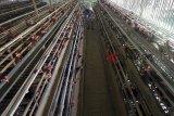 Cegah flu burung, Prancis bakal musnahkan 600 ribu ekor unggas