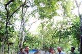 Gajah Jinak Yeti Akhirnya Mati di Way Kambas Lampung