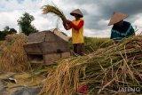 Pandemi, nilai tukar petani malah naik 0,49 persen