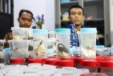 Kepala Seksi Balai Gakkum Wilayah III Pontianak David Muhammad (kanan) didampingi Perwakilan Korwas PPNS Polda Kalbar Brigadir Polisi Leo Chandra (kiri), memaparkan kronologis kasus saat rilis di Mako Satuan Polisi Hutan Reaksi Cepat (SPORC), di Kabupaten Kubu Raya, Kalimantan Barat, Jumat (22/3/2019). Sebanyak empat warga negara Polandia ditangkap Balai Konservasi Sumber Daya Alam (BKSDA) Sintang karena mengambil sampel satwa liar dan tumbuhan sebanyak 283 jenis tanpa ijin di kawasan konservasi Taman Wisata Alam Bukit Kelam, Kabupaten Sintang, Kalimantan Barat pada Selasa (19/3/2019). ANTARA FOTO/Jessica Helena Wuysang