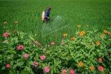 Benarkah Pestisida Tingkatkan Risiko Terkena Autisme ?