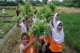 Kampanye konsumsi sayuran
