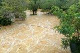 Ratusan  hektare kebun  karet  dan sawit  terendam banjir