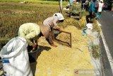 Harga gabah tingkat petani di Kulon Progo anjlok (VIDEO)