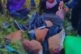 Pemburu rusa ditangkap di TN Way Kambas Lampung