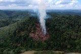 Membuka lahan dengan cara membakar