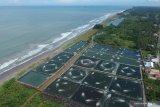 Budi daya udang windu di Ranah Pesisir berpotensi dikembangkan