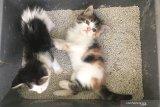 Whiskas kampanyekan adopsi kucing di Hari Kasih Sayang