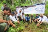 DSLNG kembali lepasliarkan 17 ekor maleo di Suaka Margasatwa Bakiriang