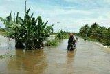 Banjir rendam dua kecamatan di Kabupaten Mamuju Tengah