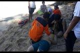 Dua wisatawan tenggelam di laut kawasan Pantai Slili Gunung Kidul