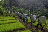 Sejumlah relawan dan petugas BKSDA serta International Animal Rescue (IAR) membawa Kukang Jawa (Nycticebus javanicus) untuk dilepasliarkan ke tempat Suaka Margasatwa Gunung Sawal (SMGS), Kabupaten Ciamis, Jawa Barat, Jumat (3/5/2019). Sebanyak 31 ekor Kukang tersebut merupakan hasil serahan masyarakat ke sejumlah BKSDA di Wilayah Jabar dan dititiprawatkan ke IAR Indonesia untuk menjalani rehabilitasi, untuk dilepasliarkan kembali ke habitatnya di SMGS dan di Hutan Konservasi Masigit-Kareumbi, Bandung. ANTARA FOTO