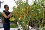 Makassar perkuat program Lorong Garden