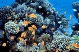 Indonesia menekankan pentingnya perlindungan terumbu karang global