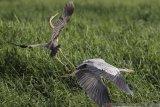 Sensus burung air di Ancol untuk pelestarian keanekaragaman hayati