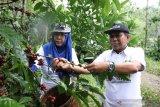 Sektor agribisnis pada 2021 tetap prospektif