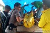 BKSDA: PT RIA hentikan operasi usai serangan harimau