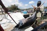 DKP Mitra klaim ekspor Tuna tertinggi di Sulut