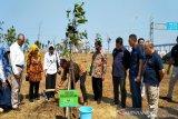 KLHK hijaukan 50 hektare kawasan Bandara Internasional Yogyakarta