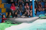 Pengunjung menyaksikan seekor lumba-lumba melakukan atraksi saat sirkus lumba-lumba digelar di Surabaya, Jawa Timur, Jumat (7/6/2019). Sirkus lumba-lumba dan sejumlah hewan lainnya yang digelar hingga 7 Juli 2019 tersebut untuk memberikan edukasi dan hiburan alternatif bagi masyarakat dalam mengisi libur Lebaran. Antara Jatim/Moch Asim/zk.