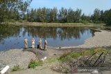 Satu ton ikan Laguna  Trisik mati diduga akibat limbah udang