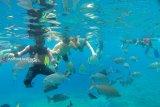 Lima destinasi snorkeling di Raja Ampat disebut surga ikan