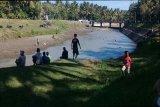 Saluran irigasi Pekik Jamal ditutup untuk perbaikan tanggul Sungai Serang