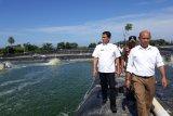 Belasan tambak udang vaname di Padang Pariaman ilegal