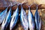 Investor siapkan Biak sebagai sentra perikanan tuna nasional