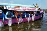 BKIPM melepas 1,2 juta ekor benih ikan di Waduk Sermo Kulon Progo (VIDEO)