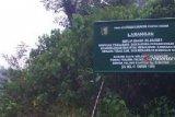 Ribuan hektare hutan lindung ditanam pohon produktif