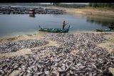 Pembudidaya ikan keramba Waduk Kedung Ombo memindahkan ikan mati dari keramba di Desa Ngasinan, Sumberlawang, Sragen, Jawa Tengah, Senin (1/7/2019). Menurut mereka kematian ratusan ton ikan keramba jenis nila dan ikan mas di waduk tersebut disebabkan perubahan cuaca. ANTARA FOTO/Mohammad Ayudha/nym.
